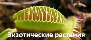 Комнатные экзотические растения