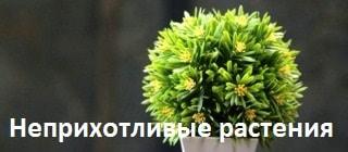 Самые неприхотливые комнатные растения
