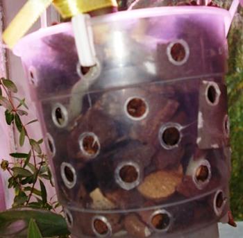 Правильный горшок для фаленопсиса