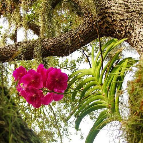 влияние температуры на орхидею
