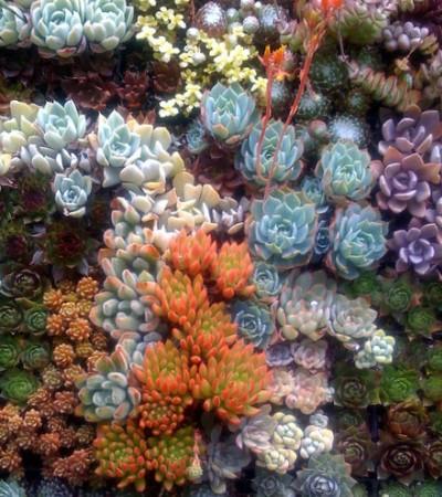 Вертикальные сады из суккулентов