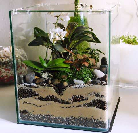Флорариум из аквариума своими руками 429