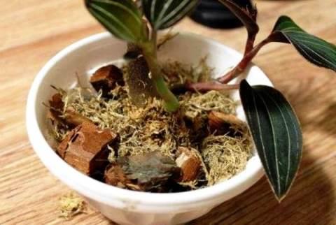 грунт орхидеи
