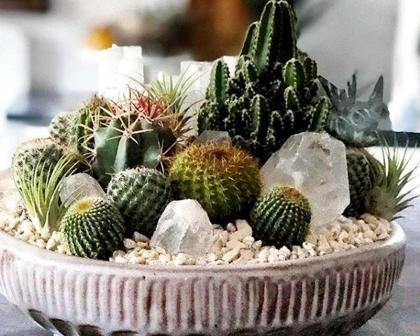 композиции +из кактусов и суккулентов фото