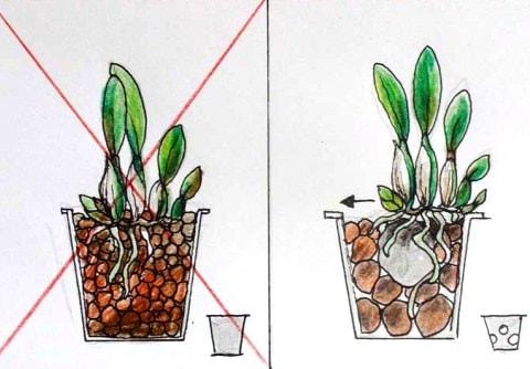 Какая кора подходит для орхидей