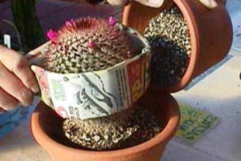кактусы в горшках фото и названия уход