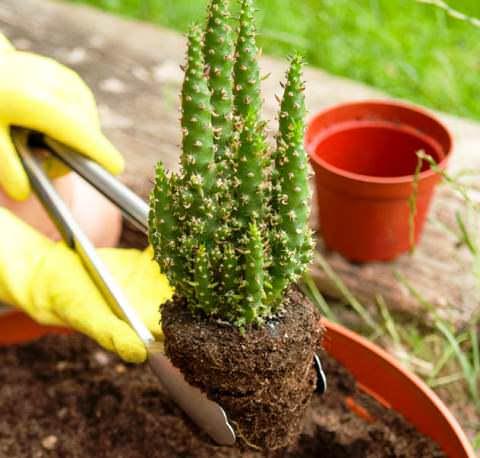 Фото 2. Щипцы для пересадки кактусов