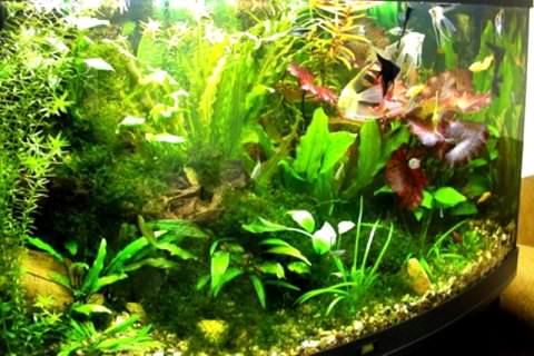 Фото 1. Много растений в аквариуме для аэрации