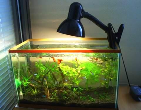 Оформление маленького аквариума