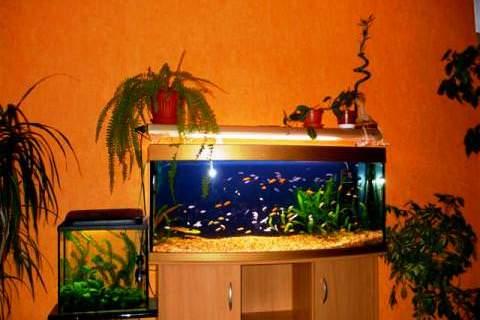 Где лучше всего поставить аквариум фото