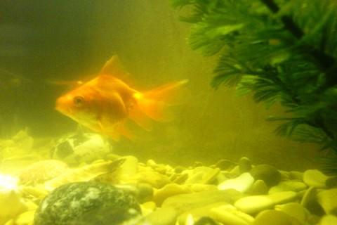 Фото 1. Мутная вода в аквариуме