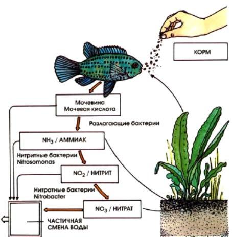 Нитраты и нитриты в аквариуме