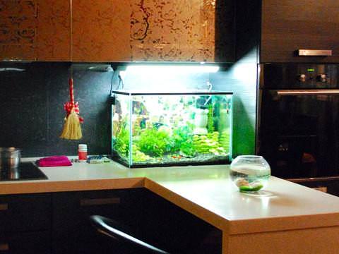 Фото 1. Подсветка для маленького аквариума
