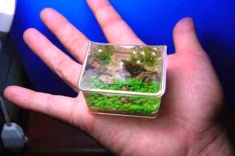 Самый маленький аквариум фото