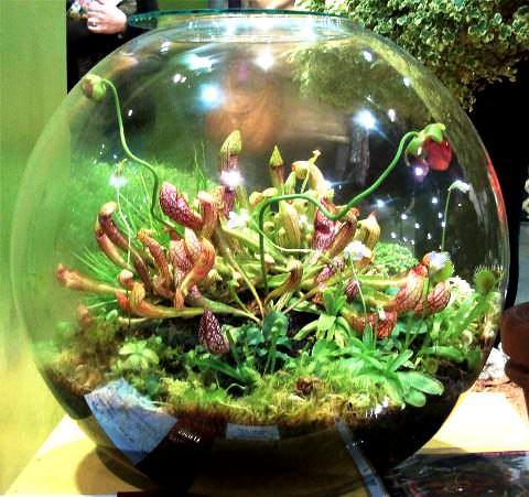 Бонсай своими руками в аквариум