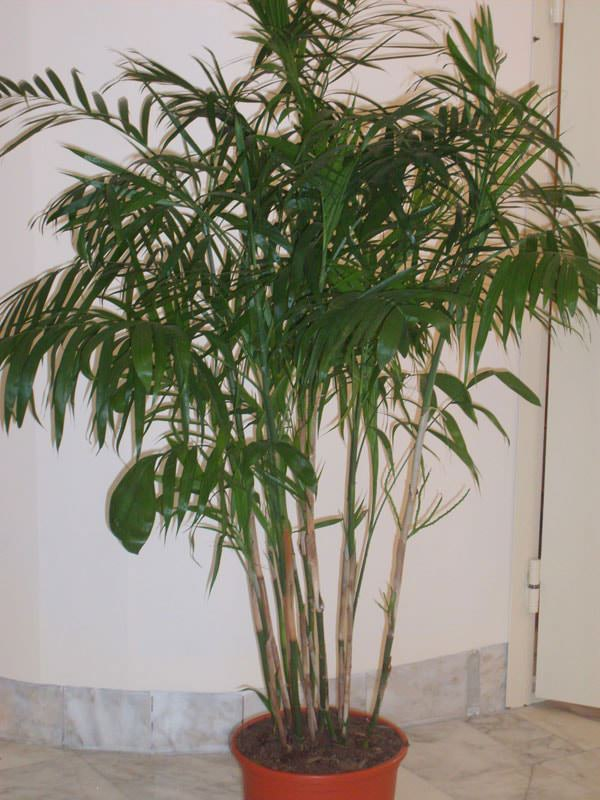 цветы в виде пальмы