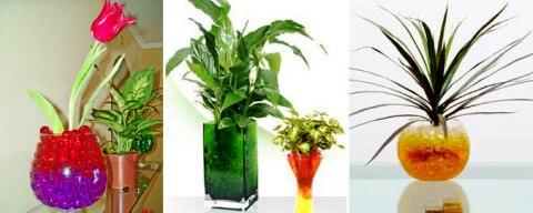 Комнатные растения в гидрогеле