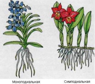 Корневая система орхидей