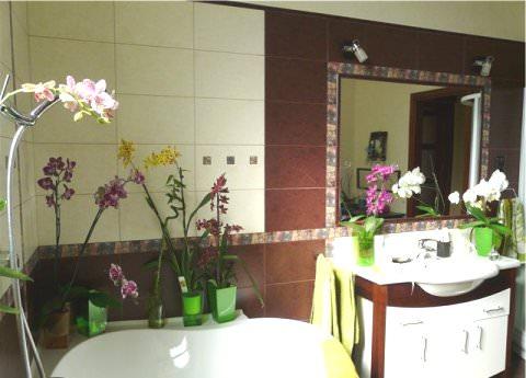 У ванній інтер'єр з орхідеєю