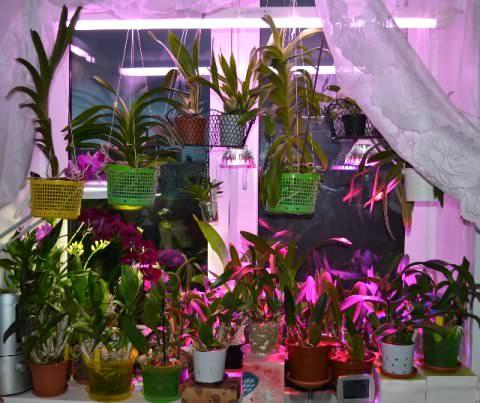 Правильная подсветка для орхидей