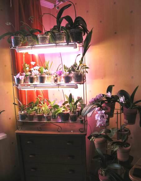Фото 1. Подсветка для орхидей