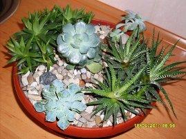 рослини в пустелі фото
