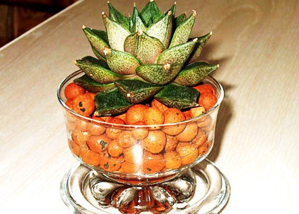 керамзит для растений фото
