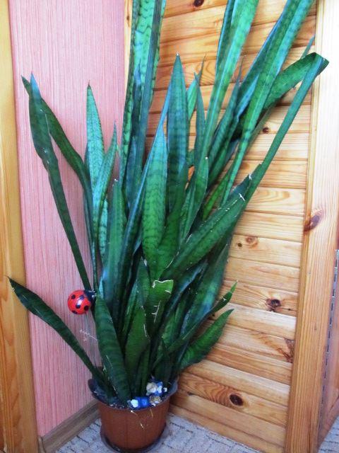 одно из знакомых растений