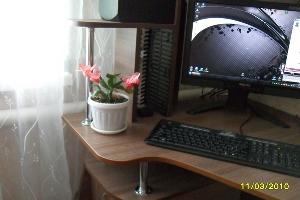 Зигокактус фото