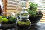 Как вырастить мох в доме
