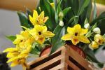 Солнечная красавица орхидея Променея - как ухаживать